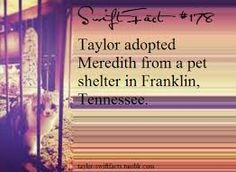Taylor Swift and Meredith Taylor Swift Blog, All About Taylor Swift, Long Live Taylor Swift, Taylor Swift Quotes, Taylor Swift Pictures, Taylor Alison Swift, Meredith Swift, Red Taylor, One & Only