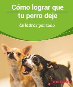 Pin En Perros