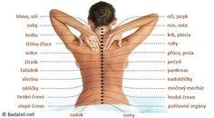 Skutočná príčina bolestí - Ako je chrbtica spojená so všetkými orgánmi