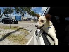 Miami Dade Animal Services: Mirror mates | Ads of the World™