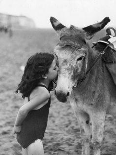lovely memories of summers with donkeys