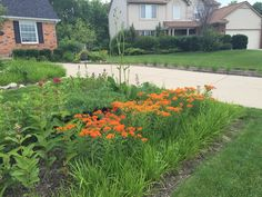 Rain Garden, Sidewalk, Gardens, Building, Plants, Pictures, Walkway, Photos, Buildings
