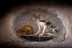 Family pet- found in the ruins of Pompeii