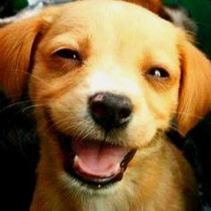 Happy puppy.