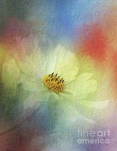 #Cosmos in #Textured #Pastels by #Kaye_Menner #Photography Quality Prints Cards Products at: http://kaye-menner.pixels.com/featured/cosmos-in-textured-pastels-by-kaye-menner-kaye-menner.html