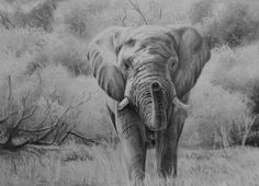 How to draw an Elephant in Pencil - Online Art Lessons Drawing Lessons, Painting Lessons, Art Lessons, Drawing Classes, Elephant Sketch, Elephant Art, Elephant Drawings, Drawing Eyes, Leaf Drawing