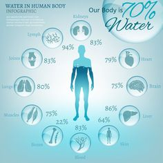 Water is the driving force of all nature. The illustration of bio infographics with human body organs icons in transparent style. Ecology and biochemistry concept. Drink more water. Benefits Of Drinking Water, Water Benefits, Importance Of Water, Human Body Organs, Water Facts, Water Poster, Agua Mineral, Kangen Water, Diet