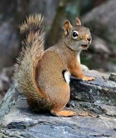 Magnificent squirrel.