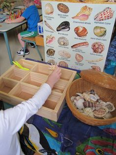 Seashell sorting, good activity for a beach program.  Would work really well with Junonia by Kevin Henkes with an elementary book discussion group.