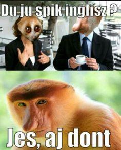 Best Memes, Funny Memes, Jokes, Polish Memes, Insta Photo, Yorkshire Terrier, Good Mood, Haha, Instagram Posts