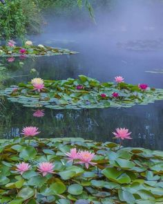 """rosiesdreams:""""The Lilly Pond"""" Flowers Nature, Exotic Flowers, Beautiful Flowers, Lotus Flowers, Lotus Pond, Lily Pond, Nature Aesthetic, Green Landscape, Water Lilies"""