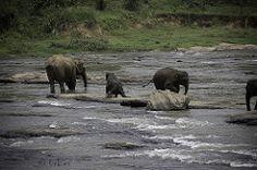 Orphelinat aux Elephants #1