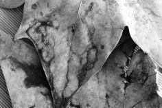 Hojas. Proyecto de Alexandra Lunar. #AlexandraLunar #xandralunar #creacionlunatica #hojas #XandraLunar #Arte #Primaveras