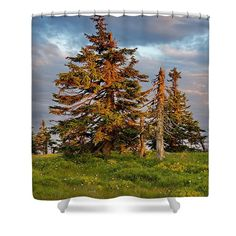 Sunset with spruces growing on alpine meadow. Tree Shower Curtains, Alpine Meadow, Geometric Decor, Unique Gifts For Men, Curtains For Sale, Decor Ideas, Gift Ideas, Pin Pin, Floral Pillows