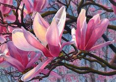 Pink magnolia art watercolor painting print by by CathyHillegas