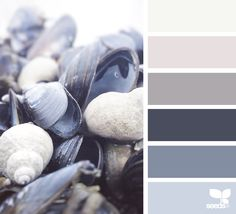 { color shell } image via: @arctic_stories