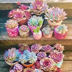 25 Types of Succulents & How to Grow It for Beginners