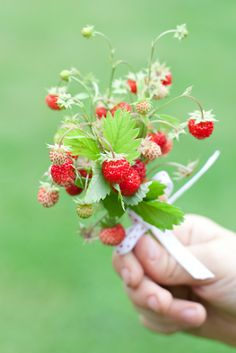 Precious little spring strawberry bouquet