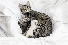 What to Do if Your Cat Won't Nurse Her Kittens