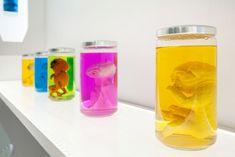 Aliens in Jars