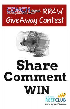 ConchAqua_contest2.thumb.png.1fc5994d2ad
