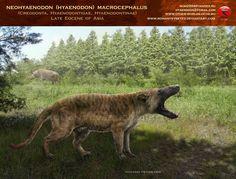 Neohyaenodon (Hyaenodon) macrocephalus by RomanYevseyev on DeviantArt