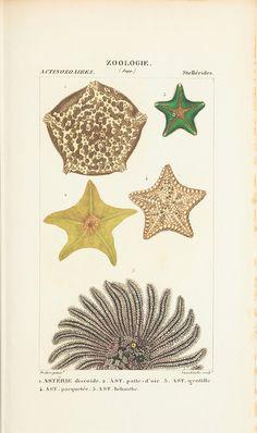 Zoological atlas