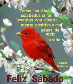 Good Morning Love, Good Morning Quotes, Spanish Greetings, Happy Wishes, Faith In Humanity Restored, Jehovah's Witnesses, Morning Messages, Spanish Quotes, Happy Saturday