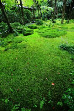 京都奥嵯峨祇王寺の鮮やかな苔庭 苔と草庵