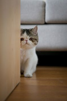 May I come in...?