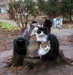 Ein etwas anderer Katzenbaum | Webfail - Fail Bilder und Fail Videos