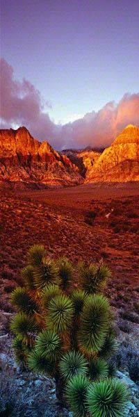 King of the Desert - Red Rock Canyon, Nevada by Peter Lik