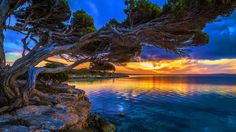 tree-growing-out-of-the-rock-on-the-sea-at-sunset-photo.jpg (1920×1080)