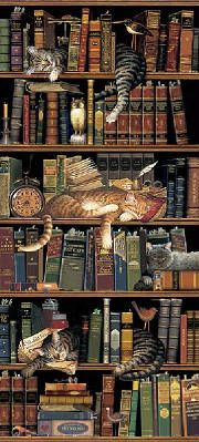 Cat infest bookcase