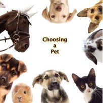 Choosing a pet - tips and guides
