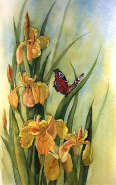 Peacock butterfly on Flag Irises by Julie Horner