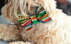 DIY how to make a collar bowtie for your dog, if you just must dress them up for the holidays. :). Simple tutorial.