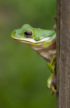 "Frog: ""Turn to Me.""                 (Photo By: ACreepingMalaise.)"