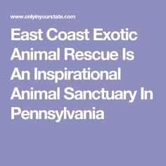 East Coast Exotic Animal Rescue Is An Inspirational Animal Sanctuary In Pennsylvania