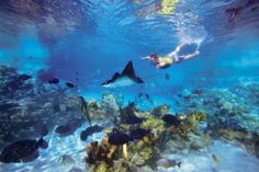 To swim with dolphins, wade with rays and snorkel among thousands of exotic fish - with my young son - a cherished memory.