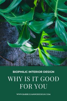 Biophilic Interior Design is all about incorporating nature into our indoor environment. It focuses on human's intuitive attraction to nature and it's increasing importance of our health and well-being.  #indoorplants #interiordesignstyles #biophilia #indoorplantsstyling #indoorplantssmallspace #smallapartmentdecorideas #biophilicinteriordesign