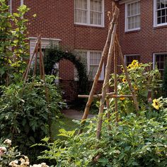 Make your own tepee tower for tomatoes to grow on:}