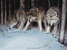 WOLVES, FOXES AND OTHER DOGS 1