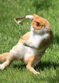 猫 VS とかげ
