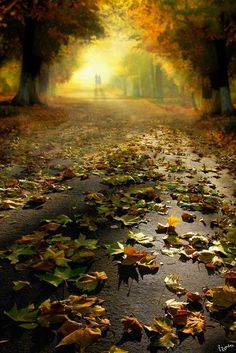 romantic walk in autumn