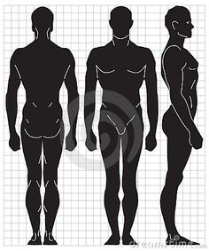 Google Image Result for http://www.dreamstime.com/vector-human-proportions-thumb8685771.jpg