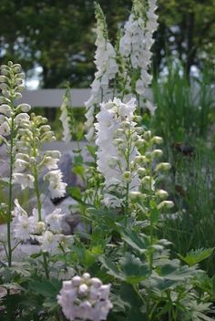 Snow White Delphiniums & Foxglove - I'd like to plant a Moon Garden this summer. White Flowers, Plants, Cottage Garden, White Gardens, Gorgeous Gardens, Beautiful Flowers, Moon Garden, Dream Garden, Beautiful Gardens