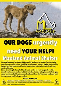 Romania-Maoland Shelter is a non-profit private Shelter with about 400 dogs.They are having are real hard time to get enough funds to feed and care for all of them.  These dogs have nowhere else to go,in the streets they are in great danger of being hurt by humans,cars or starving.. Do you want to help? No donation is too small! THANK YOU!!! and please SHARE!!  Current Account: EURO: RO59BRDE140SV07353181400 swift BRDEROBU on the name of Marinela Piperea Paypal: piperea.marinela54@yahoo.com