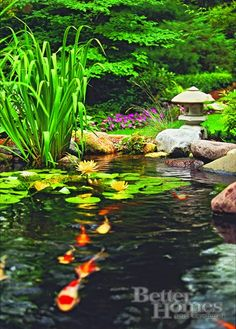 Water Gardens-not so sure about the koi but would try might be too cold here in the winter