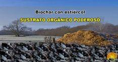 Biochar con estiércol es una manera de activar el carbón vegetal de microorganismos para su utilización en terrenos agrícolas. Desktop Screenshot, Microorganisms, Compost